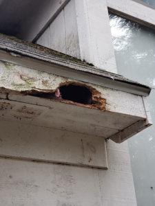 Image of Squirrel Damage